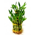 S 3 tier lucky bamboo