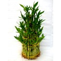 L 5 tier lucky bamboo
